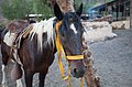 Mendoza by horse-9.jpg