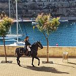 Menorcan horse in Es Castell for Sant Jaume 2014 - 1.jpeg