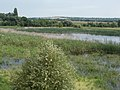 Merzse Marsh Nature Reserve from lookout, Rákoshegy, 2016 Hungary.jpg