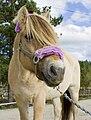 Metrosexual Fjord Horse.jpg