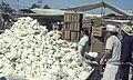 Mexico1980-205 hg.jpg
