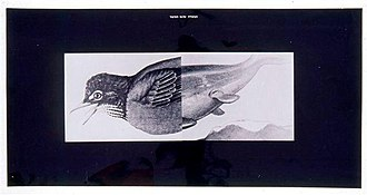 Want of Matter - The Gospel According to the Bird (1977) by Michal Na'aman. Acrylic, Photographs and Letrset on plywood, 120 x 195 cm. Tel Aviv Museum of Art