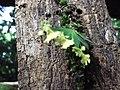 Micro orquídeas na selva virgem - panoramio.jpg