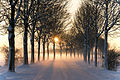 Misty winter afternoon (5277611659).jpg