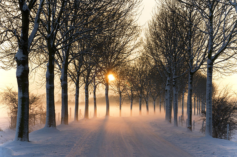 File:Misty winter afternoon (5277611659).jpg