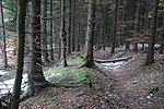 Mittelhessische Landheegen (006).JPG
