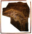 Mixosaurus cornalianus 54.JPG