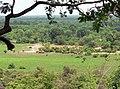Mole National Park Ghana.jpg