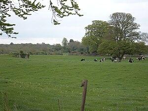 Monasternagalliaghduff - Remains of St Katherine's Abbey