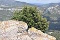 Mont - Faron, Toulon, Provence-Alpes-Côte d'Azur, France - panoramio (13).jpg