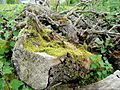 Mossy logs 3 - geograph.org.uk - 1300474.jpg