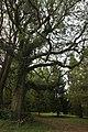 Mount Wilson NSW 2786, Australia - panoramio (92).jpg