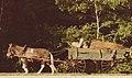 Mule cart on Vintage Drive.jpg