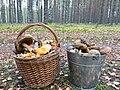 Mushrooms of Leningrad region 1.jpg
