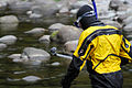 My Public Lands Roadtrip- Counting Fish in the Salmon River in Oregon (19156360312).jpg