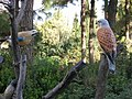 NPG Bird Migration Trail, HUJI's Edmund J. Safra Campus.jpg