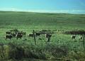 NRCSMT01089 - Montana (5025)(NRCS Photo Gallery).tif