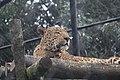 Naintial Zoo, Uttarakhand.jpg