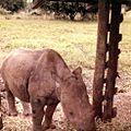 Nairobi National Park (3201564052).jpg