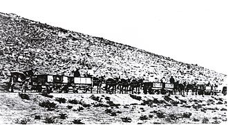 1871 in South Africa - Namaqualand Railway mule train