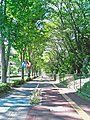 Namiki,Tokorozawa bicycle lane.jpg