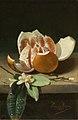 Naranja abierta y azahar - Rafael Romero Barros - MBACO.jpg