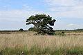 Nationaal Park Drents-Friese Wold. Locatie Fochteloërveen 07.JPG