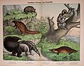 Natural history of the animal kingdom for the use of young people (Plate XV) (5974371697).jpg