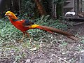 Nature 0190628-WA0116.jpg