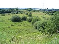 Nature Reserve in Prenton, Wirral - geograph.org.uk - 197412.jpg