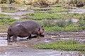 Nature of Ngorongoro Conservation Area (145).jpg
