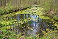 Naturschutzgebiet Herrenberg und Vorberg im Huy - Jürgenbrunnen (2).JPG