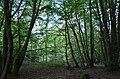 Naturschutzgebiet Oberes Emsbachtal (2).JPG