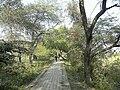 Nawabganj Bird Sanctuary, Unnao 08.JPG