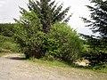 Near Crugiau Rhos-wen. - geograph.org.uk - 1317188.jpg