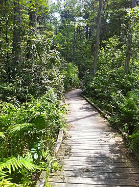 Nehantic Trail - Rhododendron Sanctuary Trail planked wooden boardwalk section.jpg
