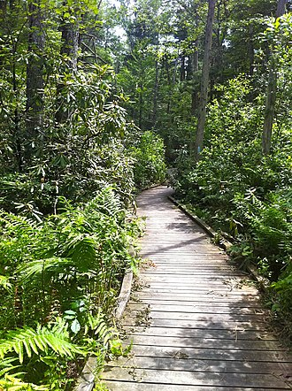 Pachaug State Forest - The Rhododendron Sanctuary Trail