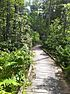 Forested boardwalk