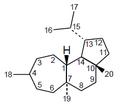 Neohomoverrucosano - Numeración.png