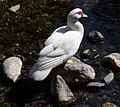 Nervi - bird.jpg