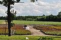 Netherlands - panoramio (2).jpg