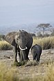 New 6572 Amboseli elephants JF.jpg