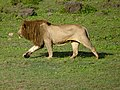 Ngorongoro Crater (19) (14145386801).jpg