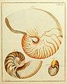Nicolaus Georg Gevens Conchylien-Cabinet ... systematisch nach der 13ten Gmelinschen Ausgabe des Linnéischen Systems (Tab. I) (6076606209).jpg