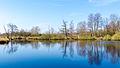 Nienwohlder Moor Wasser Uferzone 2015-03.jpg