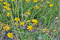 Nisqually NWR - wildflowers 01.jpg