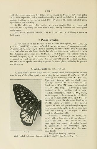 Meek's graphium - Original description and figure