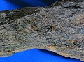 Oil-bearing sandstone (Newcastle Formation, Lower Cretaceous; Newcastle, Wyoming, USA) 1 (32714300346).jpg