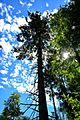 Ojcowski Park Narodowy 9.jpg