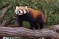 Oji zoo, Kobe, Japan (24131159902).jpg